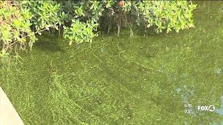 Blue-green algae bloom alert for Orange River - Manatee Park