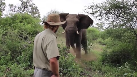 How to Survive an Elephant Attack