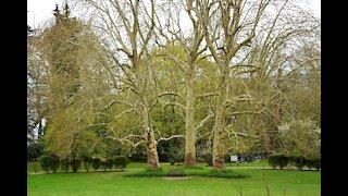 Splendid view of Taverny park