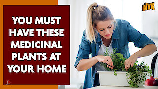 Top 4 Medicinal Plants That You Should Have In Your Home