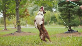 Funny dog playing with garden hose