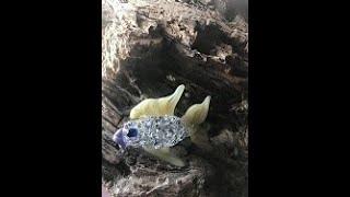 Making a glass fish