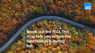 Interactive Foliage Map