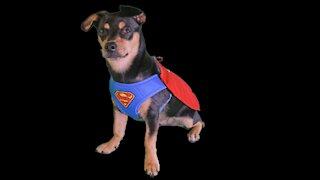 Action hero dog