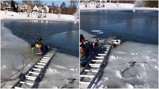 Jäätyneeseen järveen jumiin jäänyt koira pelastettiin