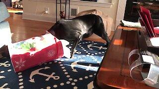 Dog rescued from euthanasia celebrates Christmas