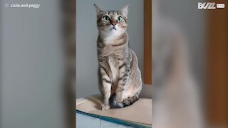 Cat ignores owner in 'stop petting your cat' challenge