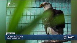 Injured bald eagle released