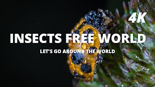 INSECT FREE WORLD
