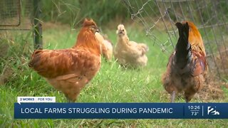 Local farms struggling during pandemic
