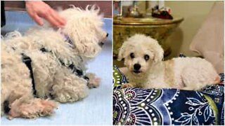 Incredible transformation of an abandoned dog!