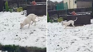 Puppy sees snow for the first time, has genuinely heartwarming reaction