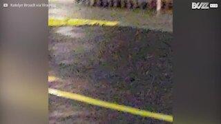 Cervo spaventato invade supermercato negli USA