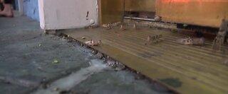 Grasshoppers swarm Las Vegas strip