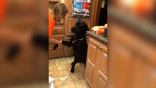 Guilty Dog Makes Adorable Apology With Puppy Dog Eyes