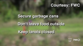 Safety tips after increase in coyotes sightings