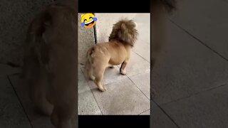 Funny Doge Video Full HD😂