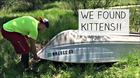 WOW! We found newborn kittens under a boat!