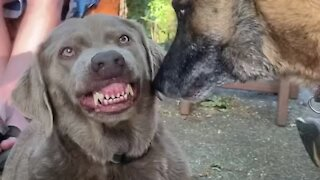 Irritated pup hilariously puts up with overly-attached dog