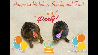 Adventures of Spocky and Troi: Happy First Birthday!