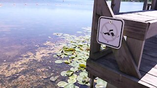Some beaches in Michigan have even had to move their swimming area to another part of the water.