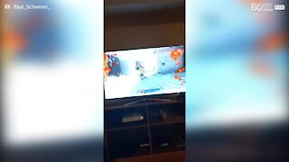 Dog loves watching owner play video game