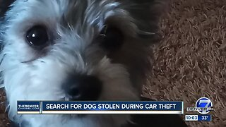 Denver family needs help tracking down stolen SUV with dog inside