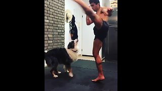 Dog spars with owner during boxing training