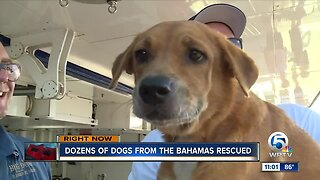 52 dogs from the Bahamas arrive in West Palm Beach