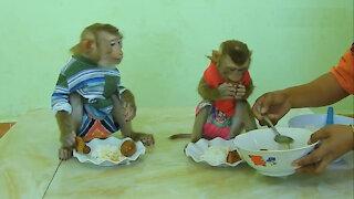 Lovely monkey, cute monkey