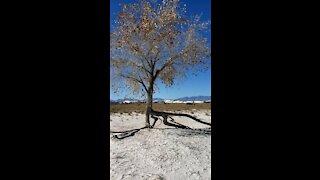White Sands National Park & Silver Bar