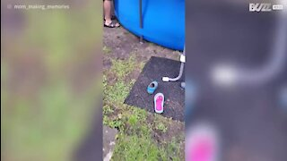 Cadela refresca-se a boiar na piscina