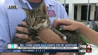 Bell Tower shops partner with Gulf Coast Humane Society for weekend pet events