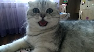 The cat that breathes like a dog :)
