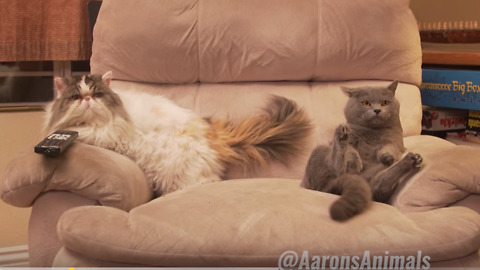 Hilarious Cats Throw Epic House Party
