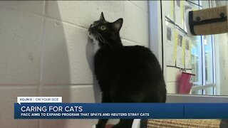 Pima Animal Care Center aims to expand program that spays and neuters stray cats