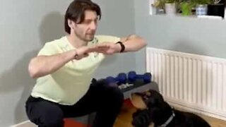 Dog works out with owner at home