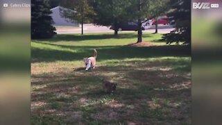 Gatto porta a spasso un cagnolino