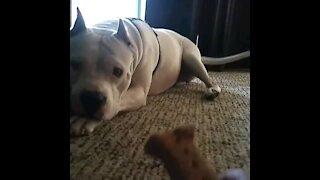 Dog Cookie Dance