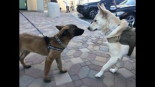 Veteran's Voice: Rescue dogs become service animals for combat veterans