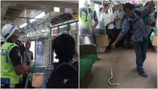 Brave commuter removes snake from packed train