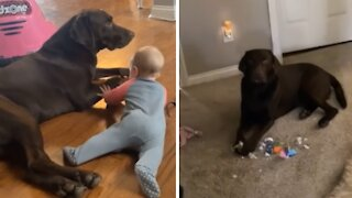 This dog is so incredibly jealous of the newest family member