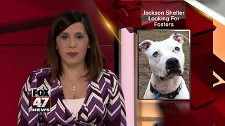 Jackson shelter looking for fosters