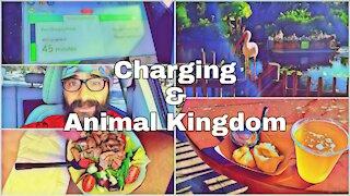 Charging and Animal Kingdom