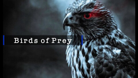 ~BIRDS OF PREY - IPOT PRESENTS - 3.18.21~