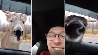 Friendly deer walks up to car, introduces himself to driver
