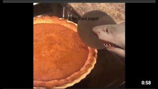 Shark puppet makes pumpkin pie