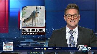 Cochise County warns of rabid fox