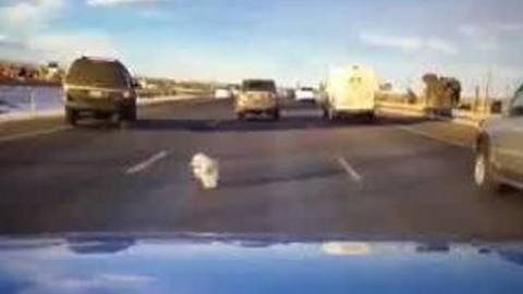 Dog falls from moving vehicle on I-70