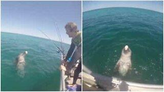 Friendly dolphin greets fishing boat in Australia